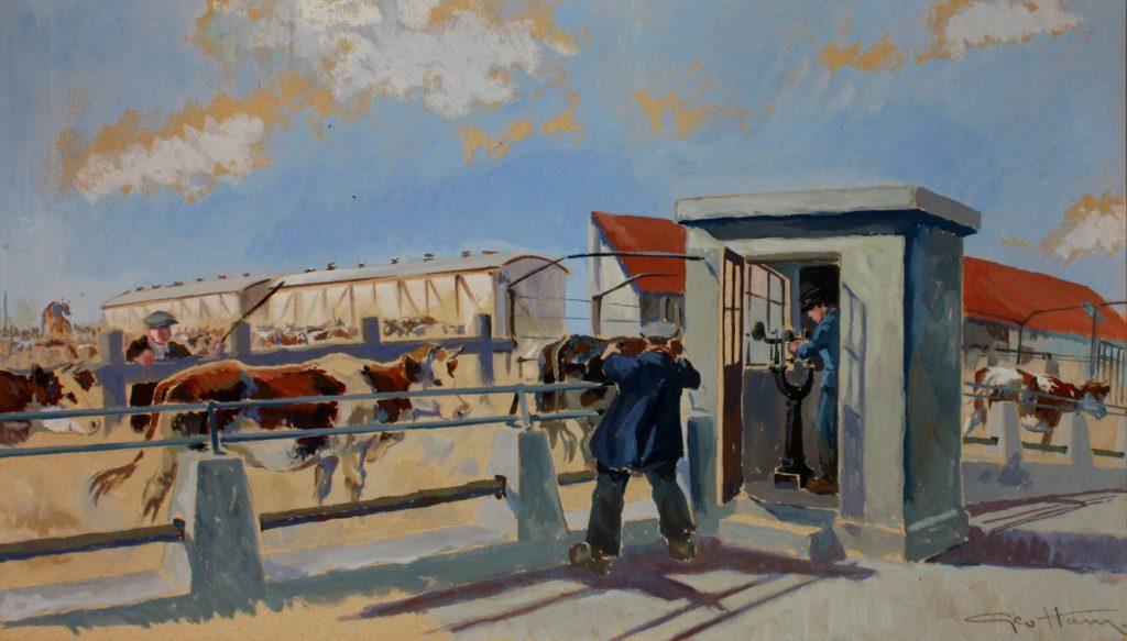 Un employée de l'abattoir regarde les vaches à l'air libre